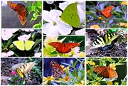 19th Sep 2020 - And Butterflies Are Free To Fly So Fly Away