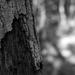 Forest - Textures & Light
