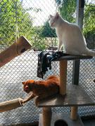 17th Sep 2020 - Ginger (Bob) & Nekari