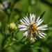 Pollination Nation