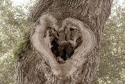 20th Sep 2020 - Love U too nature