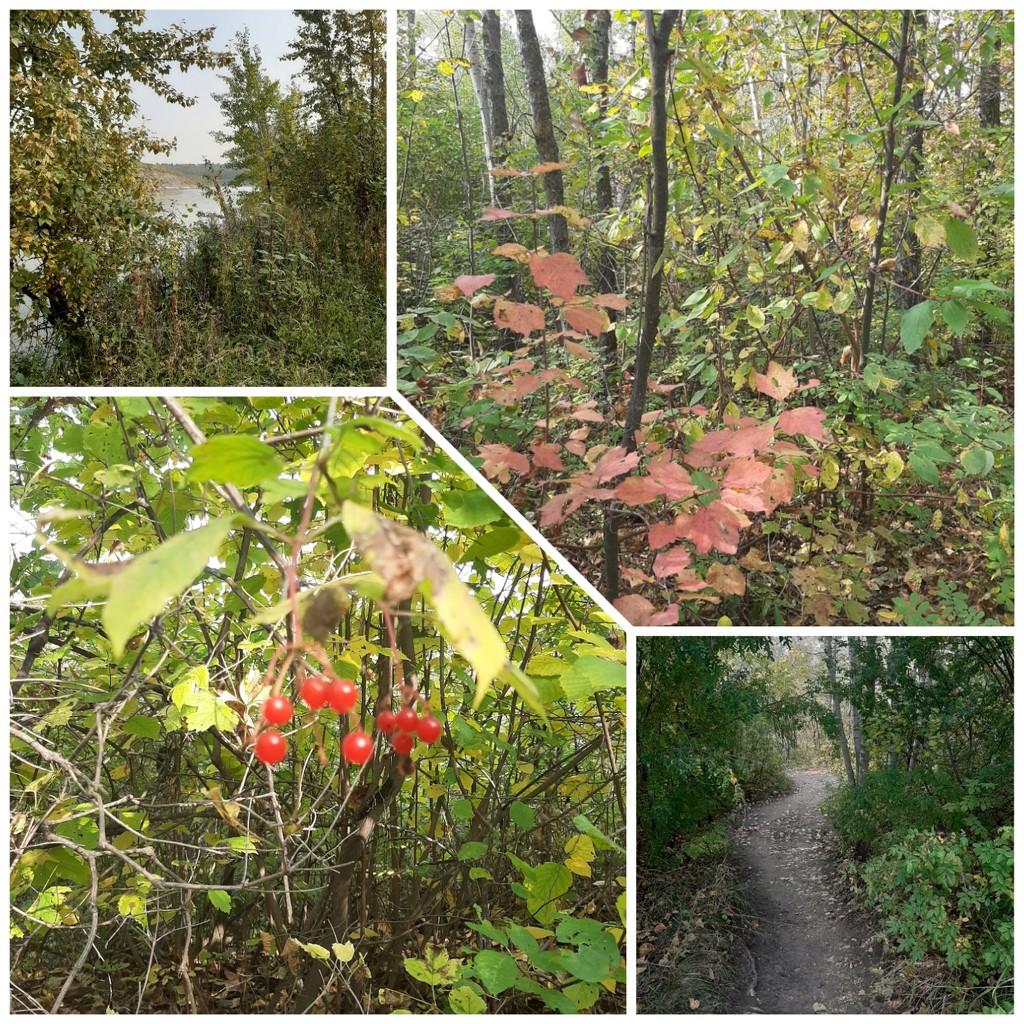 Autumn Landscape  by bkbinthecity