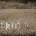 Wood Pylons at Minsi Lake