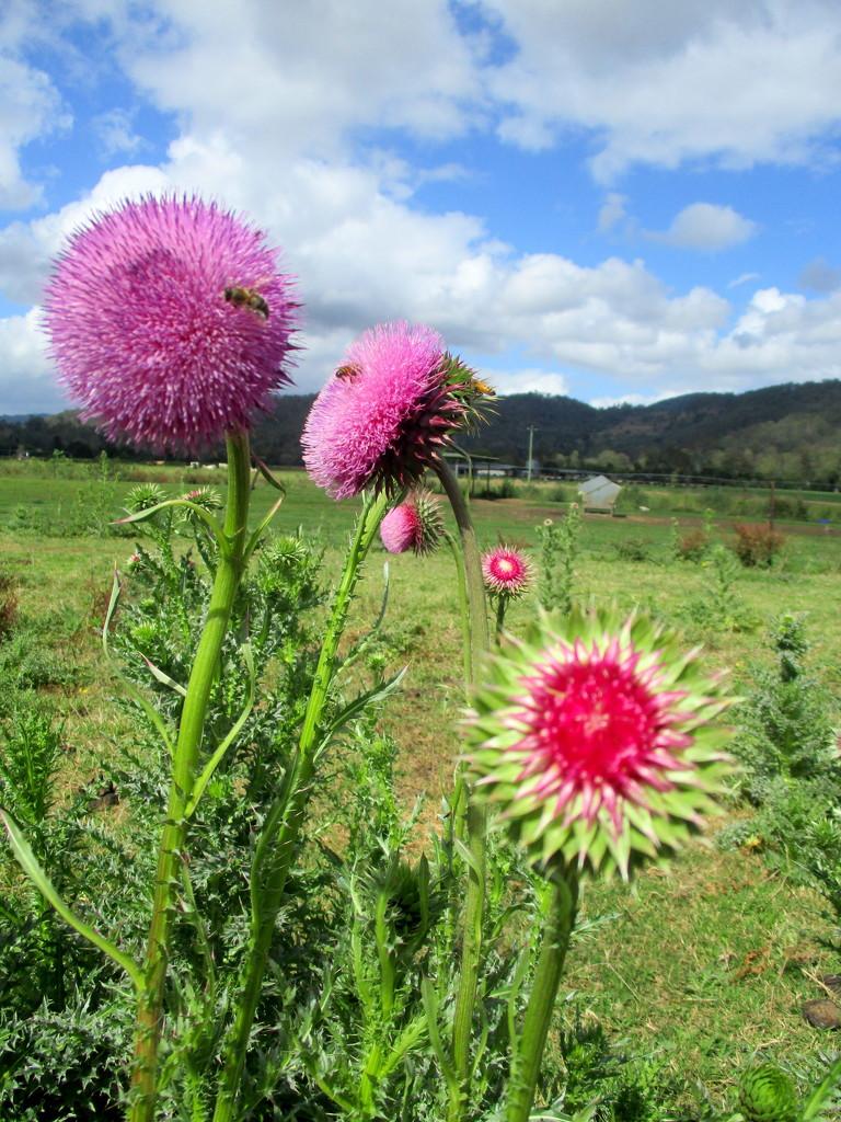 Flowers in the field by 777margo