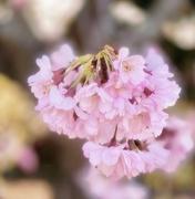21st Sep 2020 - Full blossom
