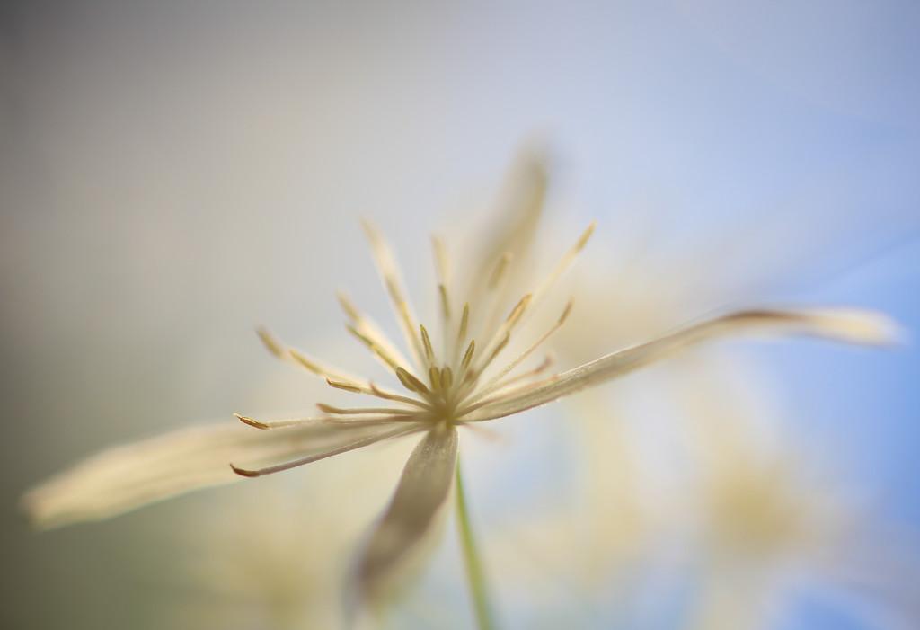 Whispy by abhijit