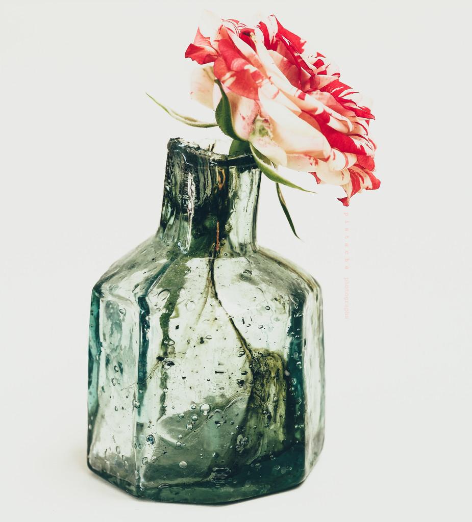 crimson-splashed rose by pistache