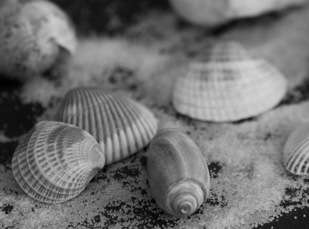 Seashells by randystreat