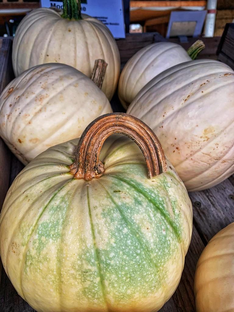 A pumpkin with a handle ! by cocobella