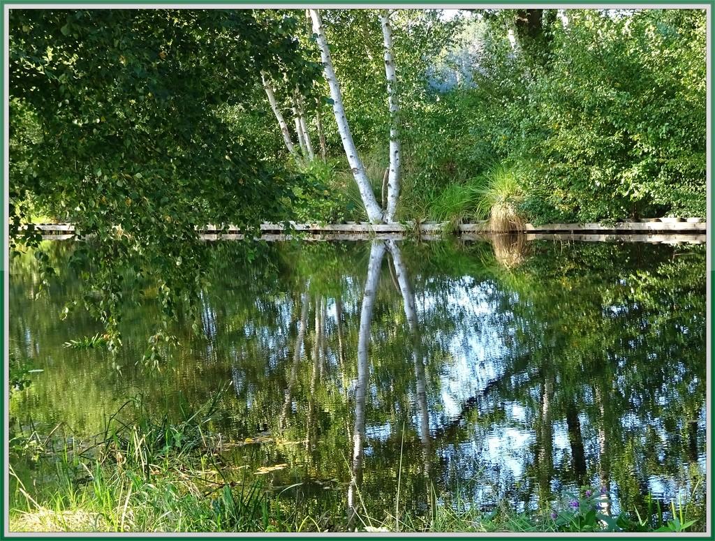 reflection by gijsje
