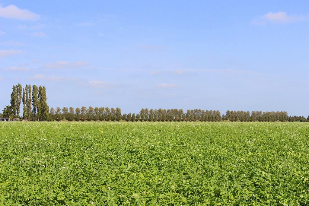Row of trees (4)  by pyrrhula