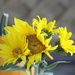 Bouquet Of Sunflowers On One Stem
