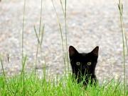 21st Sep 2020 - Peek-a-Boo Kitty