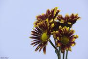 19th Sep 2020 - Fall Bouquet