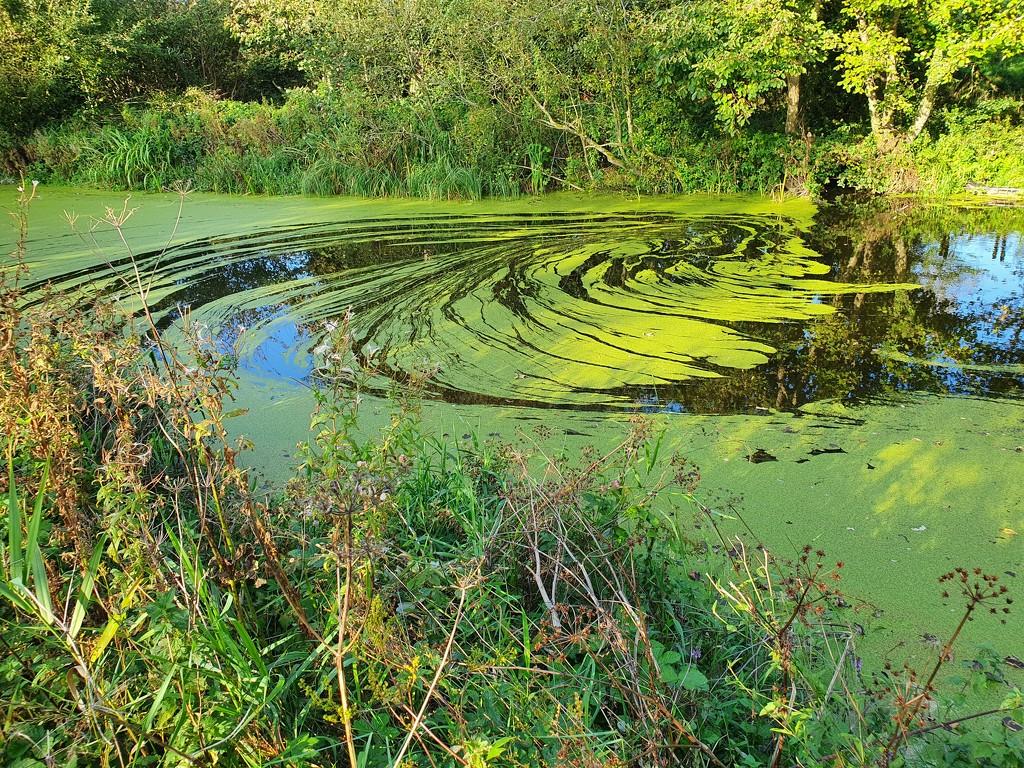 Pond weeds swirls by pinkpaintpot