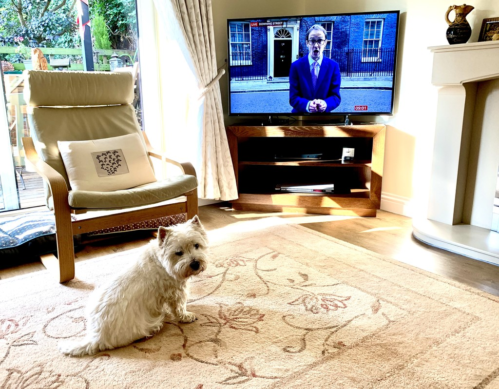 George waiting for news by pamknowler