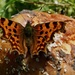 COMMA FROM ABOVE by markp