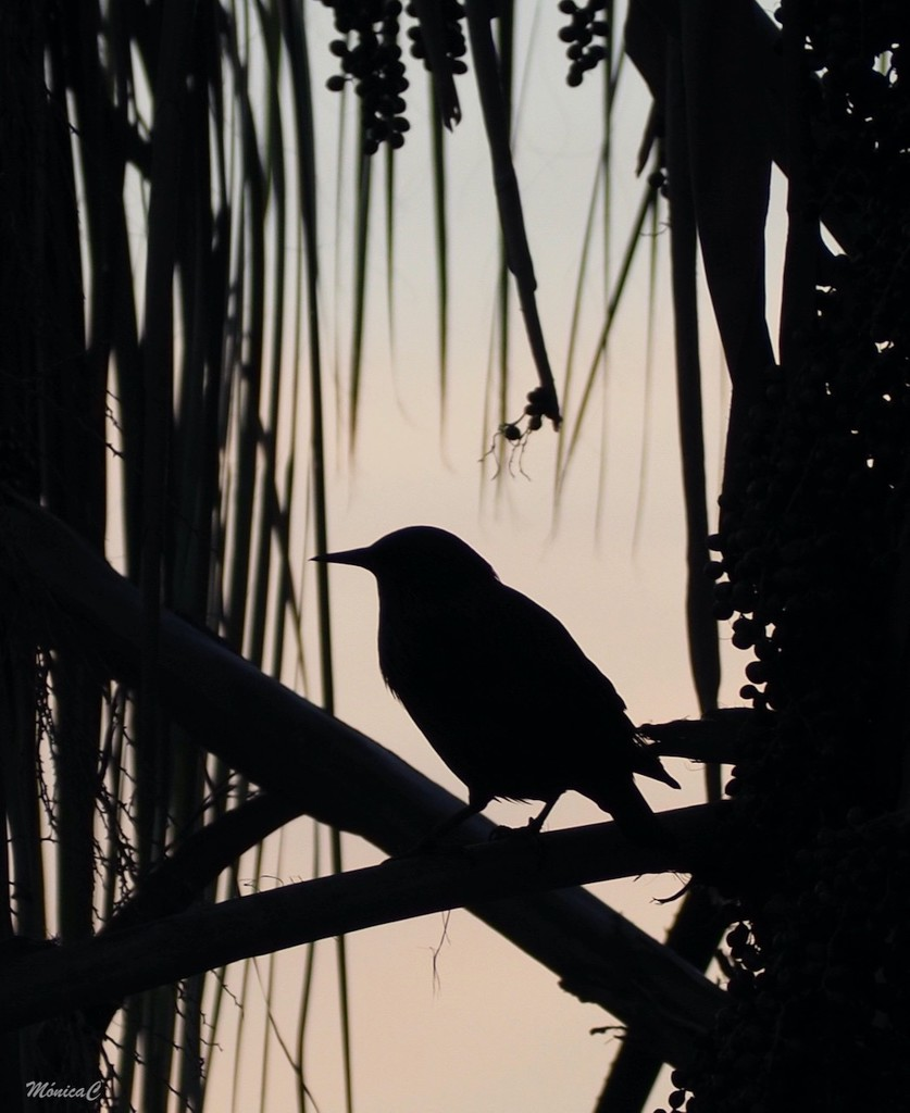 Bird by monicac