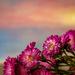 flowers in the window by jernst1779
