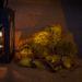 Autumn still life by 365projectmalh3