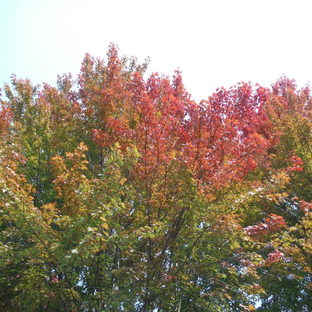 Symbol of Autumn, on the Solstice by spanishliz