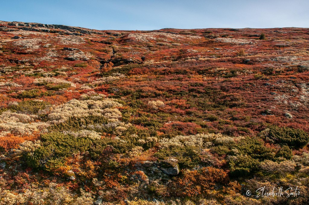 Autumn on the mountain by elisasaeter
