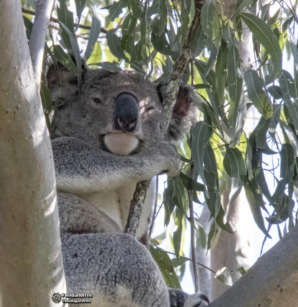 almost awake by koalagardens