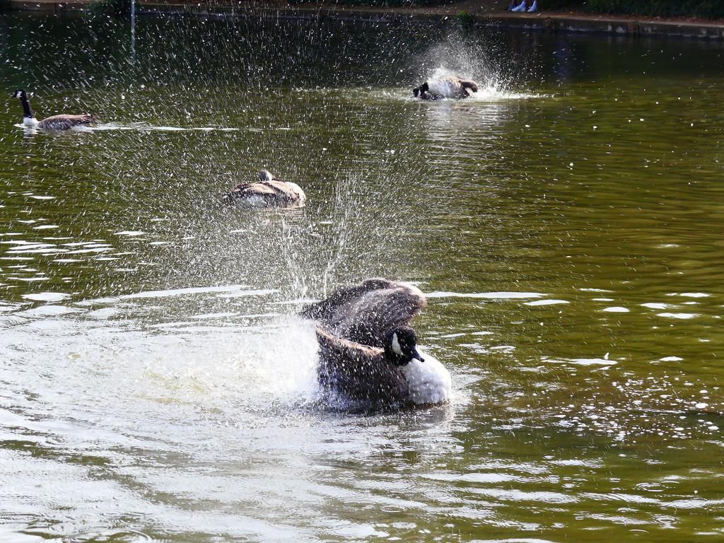 Having A Splashing Time by snoopybooboo