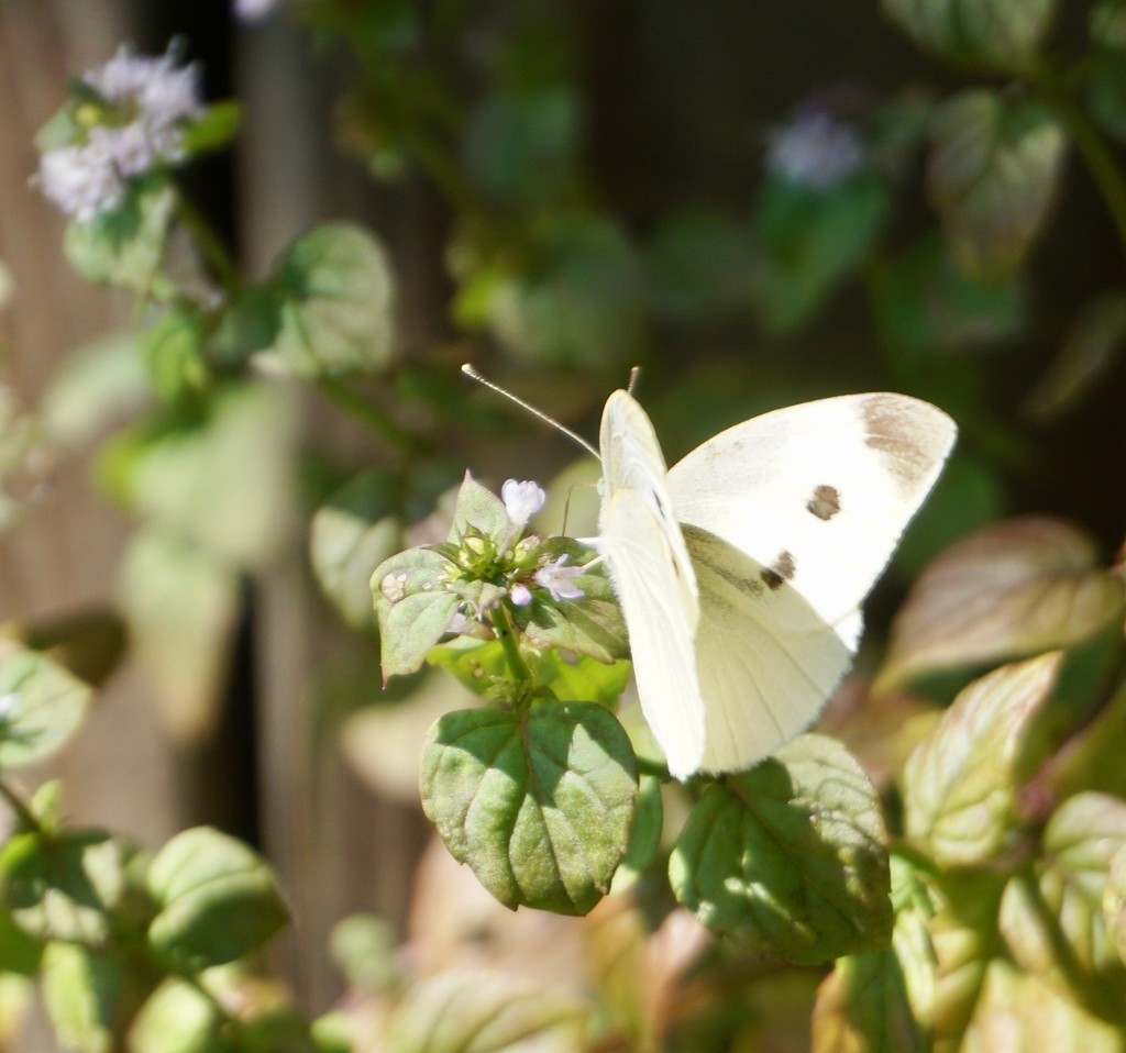 A Delicate Butterfly on a Delicate Flower by allie912