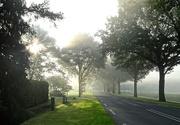 23rd Sep 2020 - misty morning