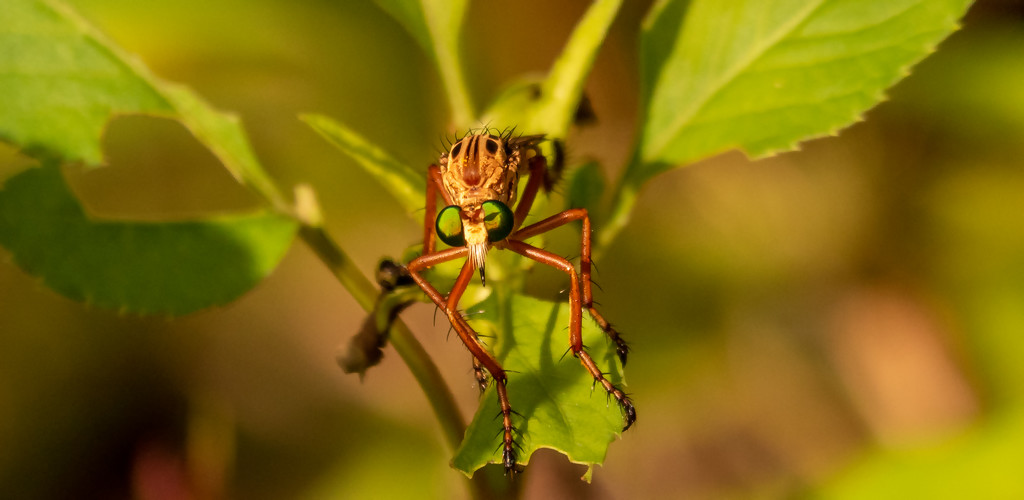 Green Eyed Bug! by rickster549