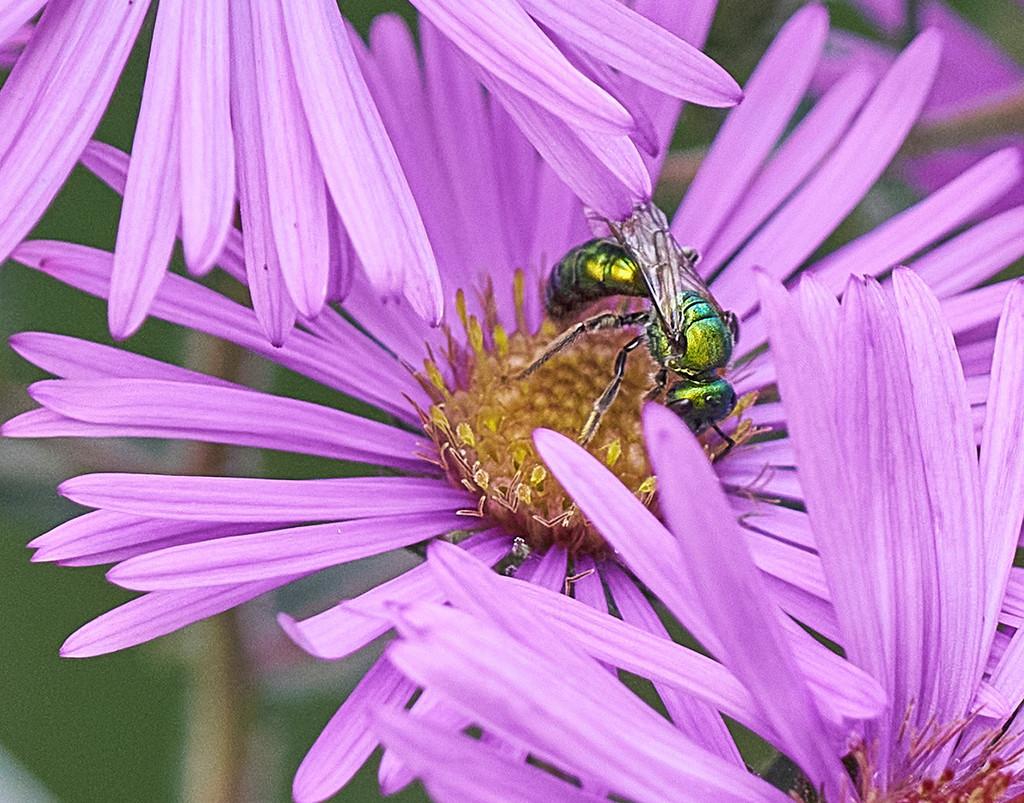 Metallic Insect by gardencat