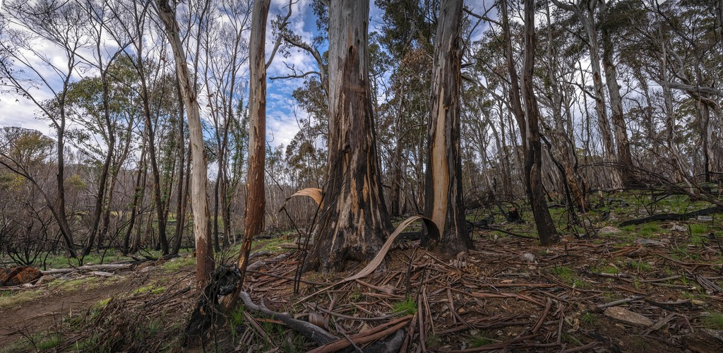 Bushland scene by pusspup