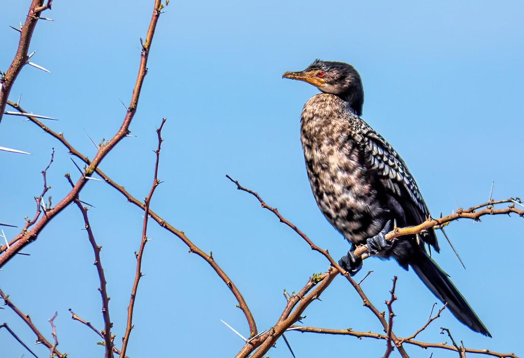 Cormorant in the tree by ludwigsdiana