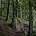 Trail through the woods. by theredcamera