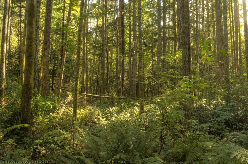 A walk Thru the Woods by byrdlip