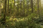 22nd Sep 2020 - A walk Thru the Woods