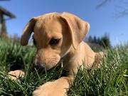 18th Sep 2020 - Puppy pablo