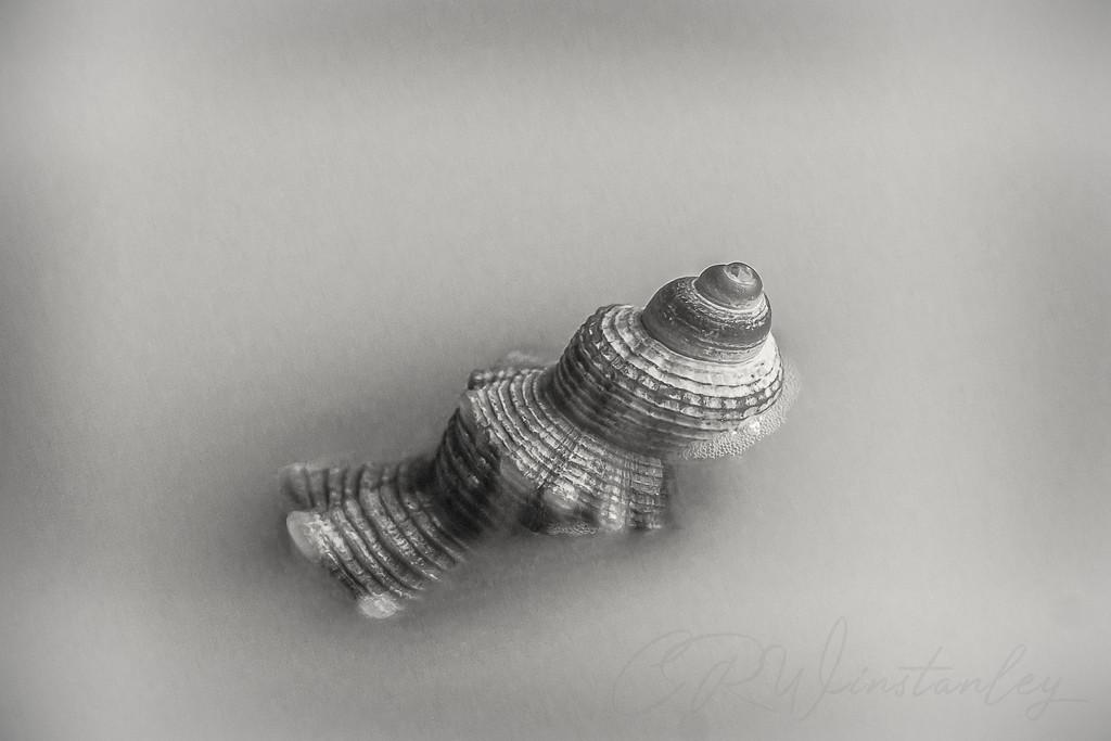 Shell by kipper1951