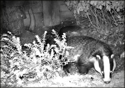 22nd Sep 2020 - Nocturnal visitor