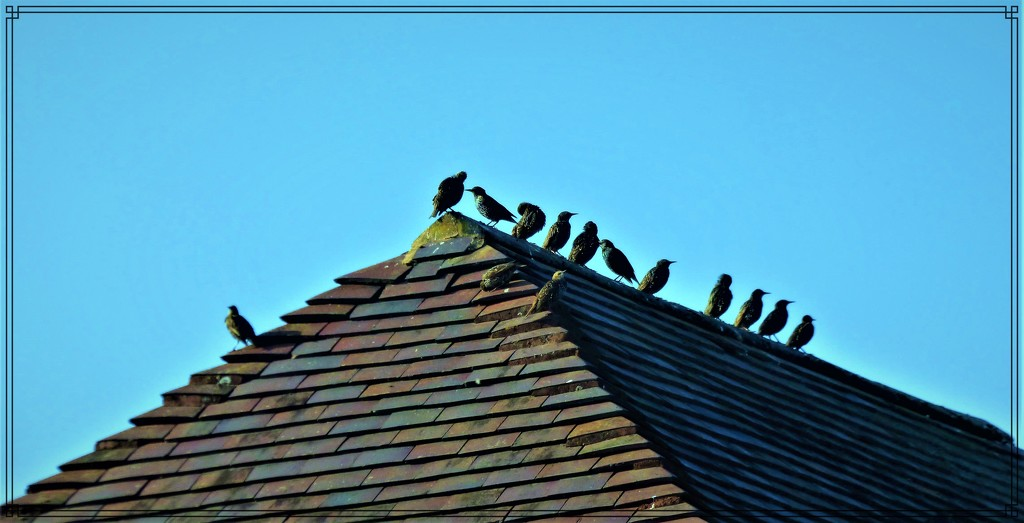 Sittling on the roof-top by beryl