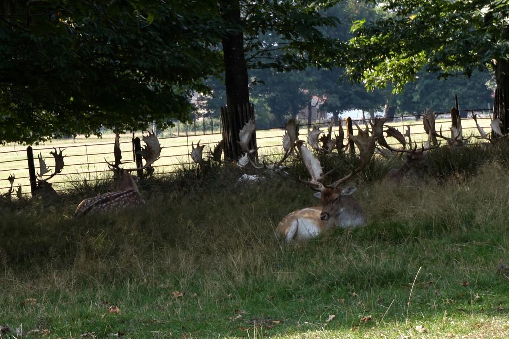 Sept 22nd The Deer Park ll by valpetersen