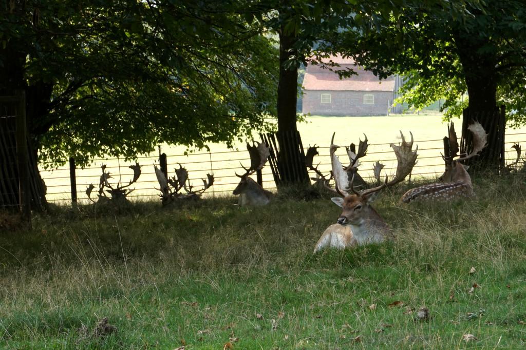 Sept 20th The Deer Park by valpetersen