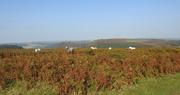 21st Sep 2020 -  Ponies on Hergest Ridge