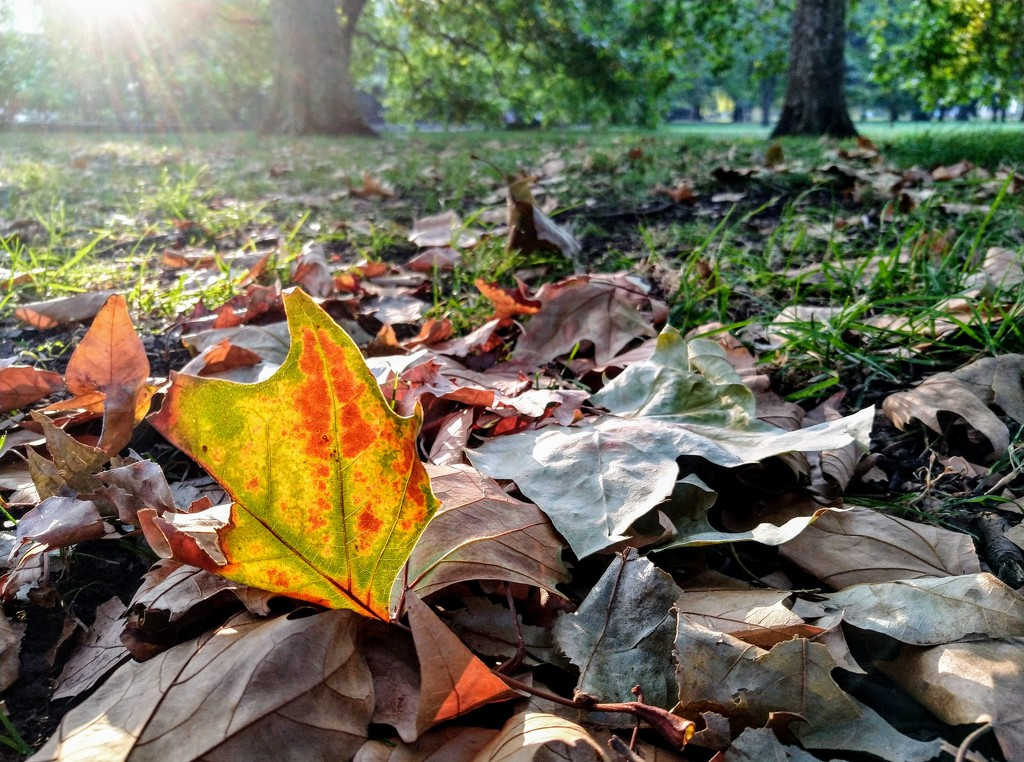 Autumn leaf by boxplayer