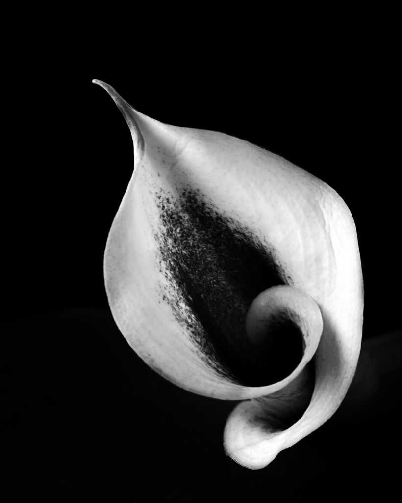 calla curves by jernst1779