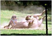 23rd Sep 2020 - Taking a Dirt Bath