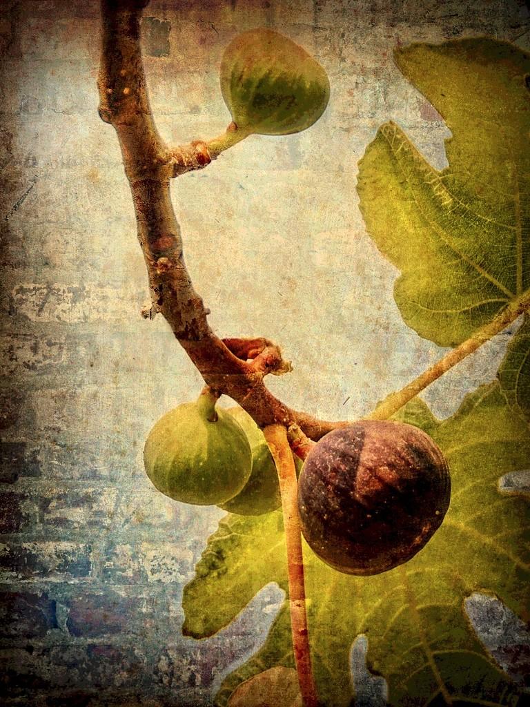 Figs  by joysfocus