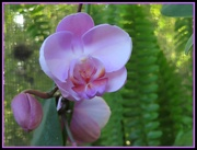 24th Sep 2020 - Orchid 2020