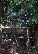24th Sep 2020 - Natural barrier